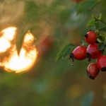 IMG_600d_007234_fall_colors_bockhorst