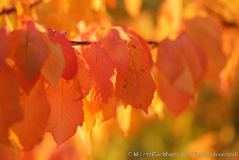 IMG_5d1_003038_autumn_2015